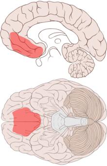 SomaticMarkerHypothesis